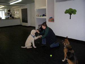 Pet dog training in action
